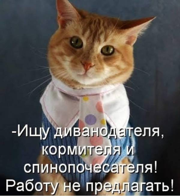 http://s9.uploads.ru/t/GfxHj.jpg