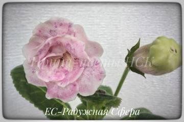 http://s9.uploads.ru/t/H0iAB.jpg