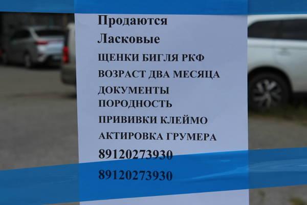 http://s9.uploads.ru/t/I25aH.jpg