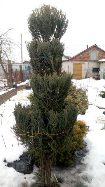 http://s9.uploads.ru/t/I9kKw.jpg