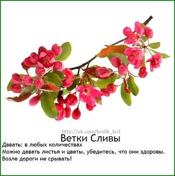 http://s9.uploads.ru/t/IKNET.jpg