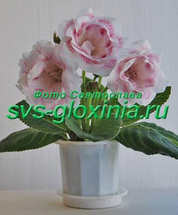 http://s9.uploads.ru/t/IyVSJ.jpg