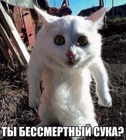 http://s9.uploads.ru/t/JBP3e.jpg