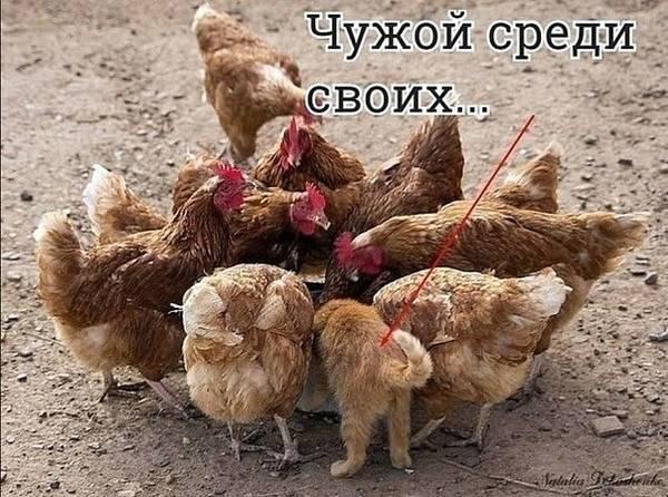 http://s9.uploads.ru/t/JQiMD.jpg