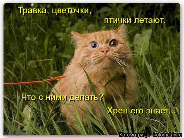 http://s9.uploads.ru/t/JWiuV.jpg