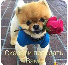 http://s9.uploads.ru/t/K3yRP.jpg