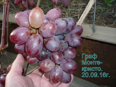 http://s9.uploads.ru/t/Lip1a.jpg