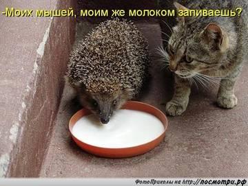 http://s9.uploads.ru/t/MFfVI.jpg