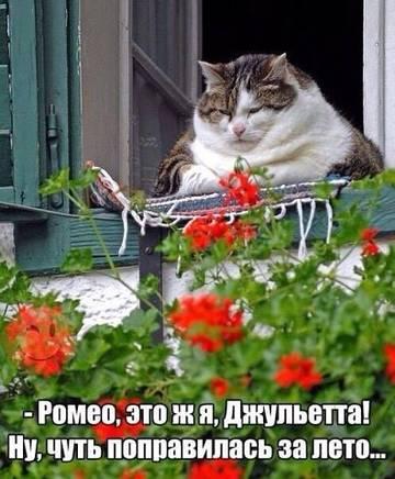 http://s9.uploads.ru/t/MrtFH.jpg