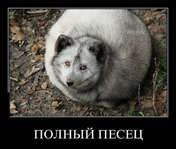 http://s9.uploads.ru/t/NIdSf.jpg
