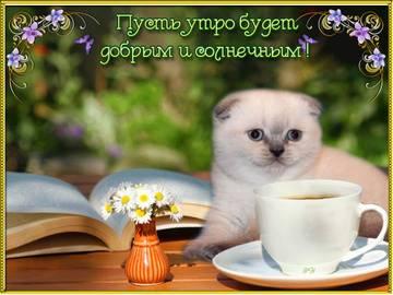 http://s9.uploads.ru/t/NSu8x.jpg