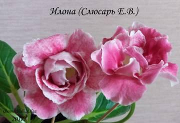 http://s9.uploads.ru/t/NVz8A.jpg