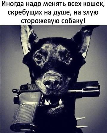 http://s9.uploads.ru/t/O2EoS.jpg