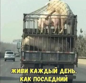 http://s9.uploads.ru/t/OH3gs.jpg
