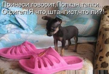 http://s9.uploads.ru/t/P81OR.jpg