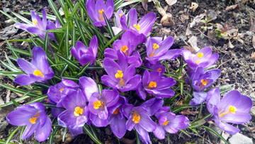 Весна идет!!! - Страница 21 PRMoS
