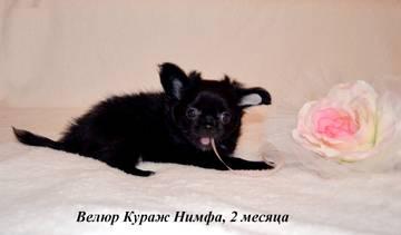 http://s9.uploads.ru/t/PU5Im.jpg