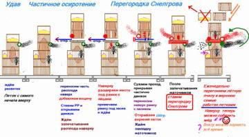 http://s9.uploads.ru/t/Phyas.jpg