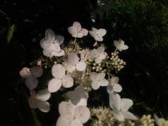 http://s9.uploads.ru/t/TEPL7.jpg