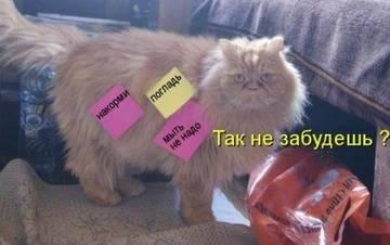 http://s9.uploads.ru/t/TLUpE.jpg