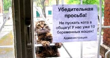 http://s9.uploads.ru/t/VIzrx.jpg