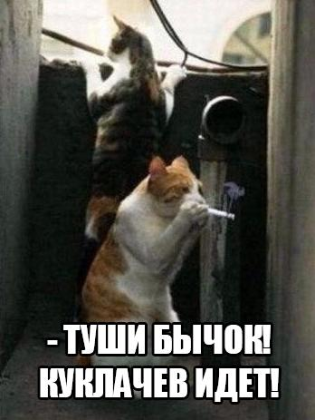 http://s9.uploads.ru/t/Va75G.jpg