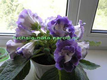 http://s9.uploads.ru/t/VoKXw.jpg