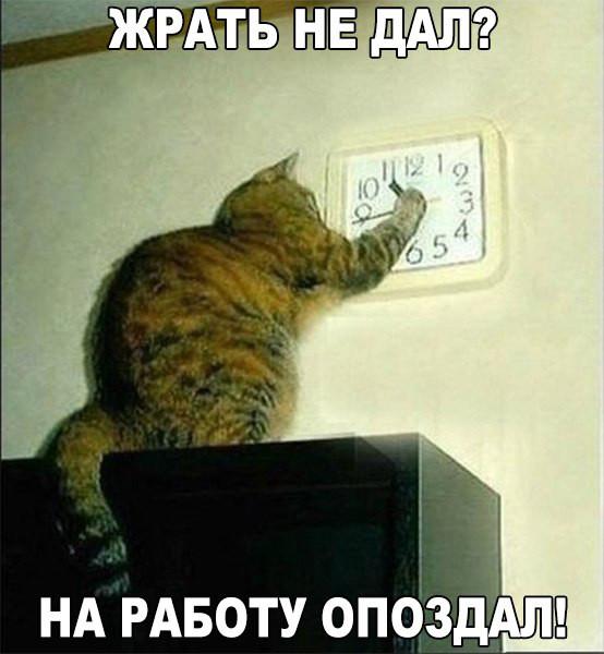 http://s9.uploads.ru/t/Vsqt3.jpg