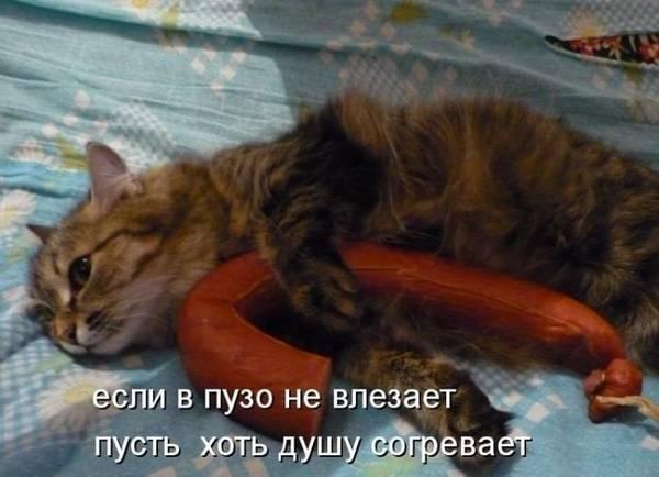 http://s9.uploads.ru/t/WICU4.jpg