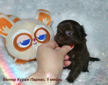 http://s9.uploads.ru/t/WNScq.jpg