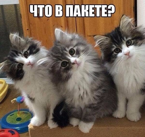 http://s9.uploads.ru/t/WhsKO.jpg