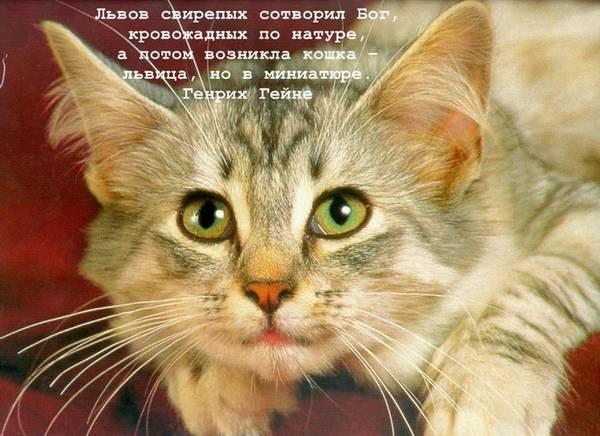 http://s9.uploads.ru/t/XHRyS.jpg