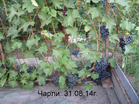 http://s9.uploads.ru/t/XMvoi.jpg