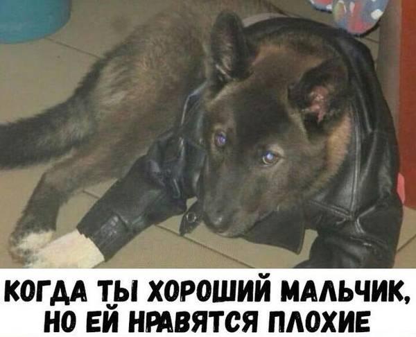 http://s9.uploads.ru/t/XV00f.jpg
