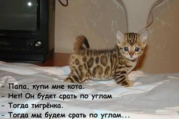 http://s9.uploads.ru/t/XkP49.jpg