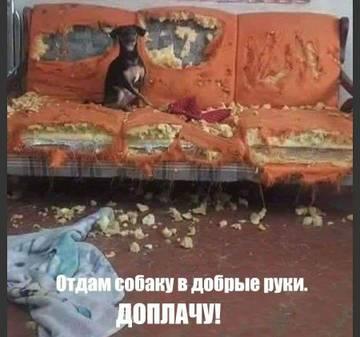 http://s9.uploads.ru/t/Xy5H0.jpg