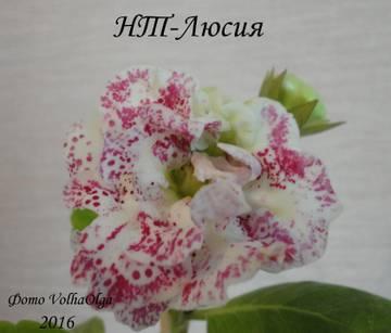 http://s9.uploads.ru/t/ZIwlf.jpg