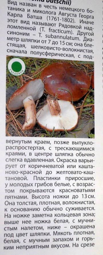 http://s9.uploads.ru/t/Zbmot.jpg