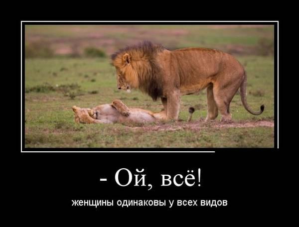 http://s9.uploads.ru/t/Zs6Ne.jpg