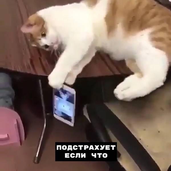 http://s9.uploads.ru/t/a1Z6H.jpg