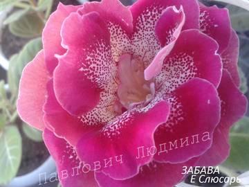 http://s9.uploads.ru/t/ah1wj.jpg