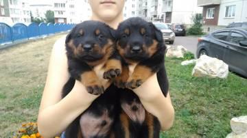 http://s9.uploads.ru/t/cgoaZ.jpg