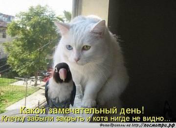 http://s9.uploads.ru/t/d4a3E.jpg