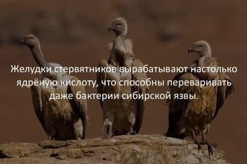 http://s9.uploads.ru/t/dOXmF.jpg