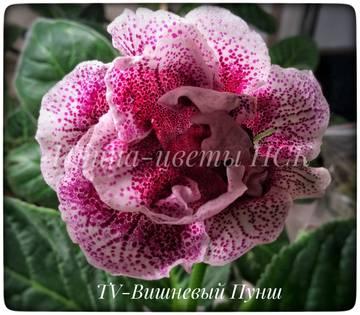 http://s9.uploads.ru/t/dWNj4.jpg