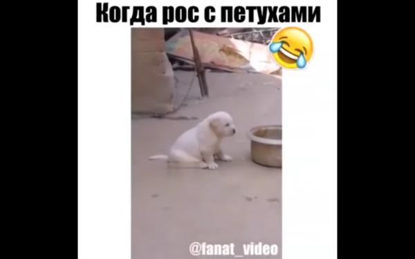 http://s9.uploads.ru/t/dZUPx.png