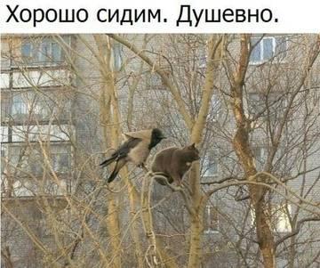 http://s9.uploads.ru/t/ePRGh.jpg
