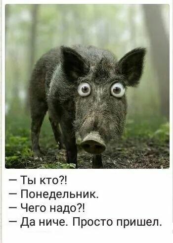 http://s9.uploads.ru/t/f6n4P.jpg