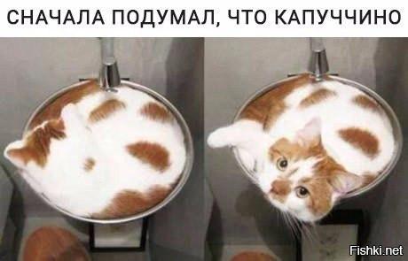 http://s9.uploads.ru/t/fC7yV.jpg