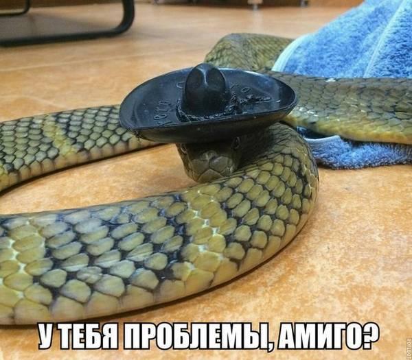 http://s9.uploads.ru/t/fe8BU.jpg